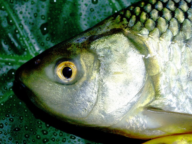 malá rybka