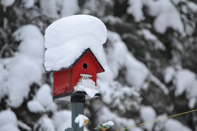 sníh na budce