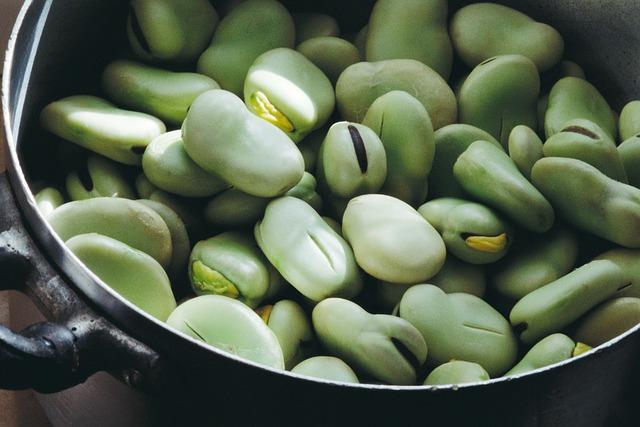 Mungo je odrůda fazolí podobná hrachu